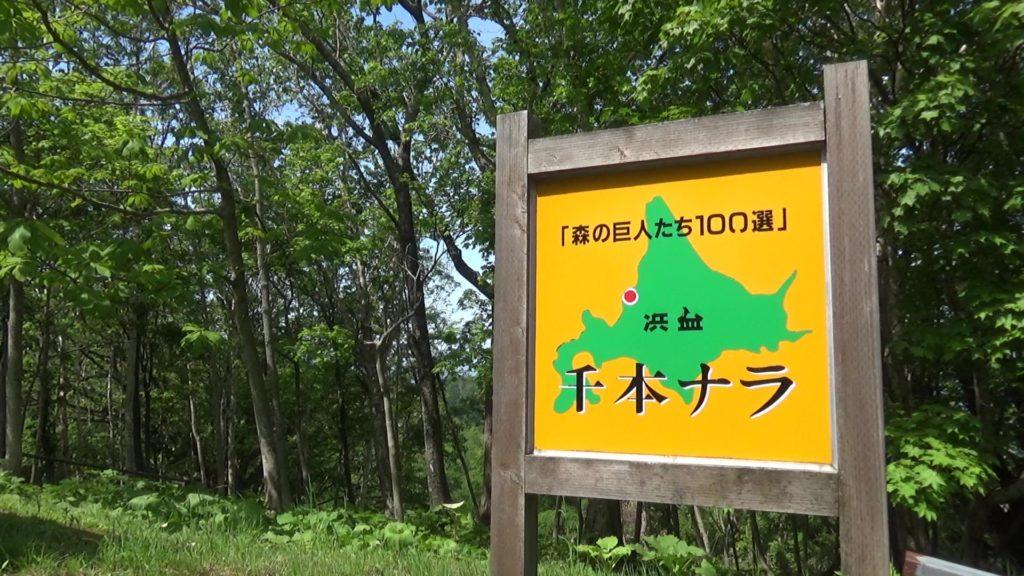 「千本ナラ」「森の巨人たち100選」の看板