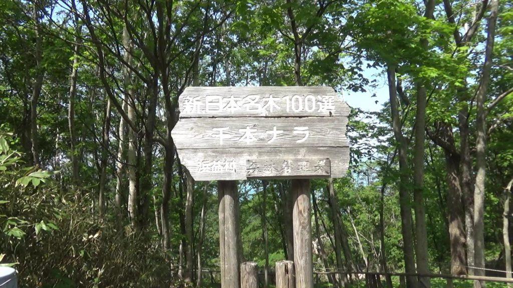 新日本名木100選の看板