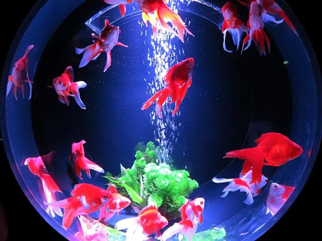 水槽のブクブクは、魚の飼育に必ず必要