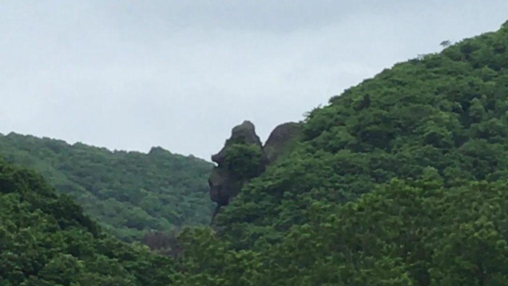 マウンテンゴリラ岩
