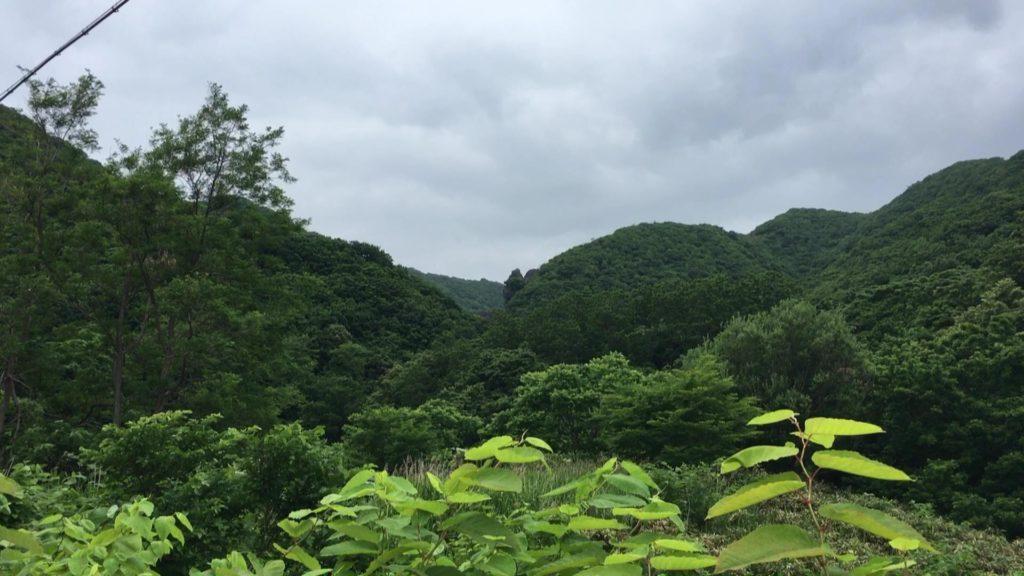 マウンテンゴリラ岩(泊村)