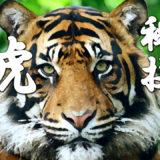 甲野義紀さん(古武術)の本で学んだ「虎ひしぎ」の手のやり方